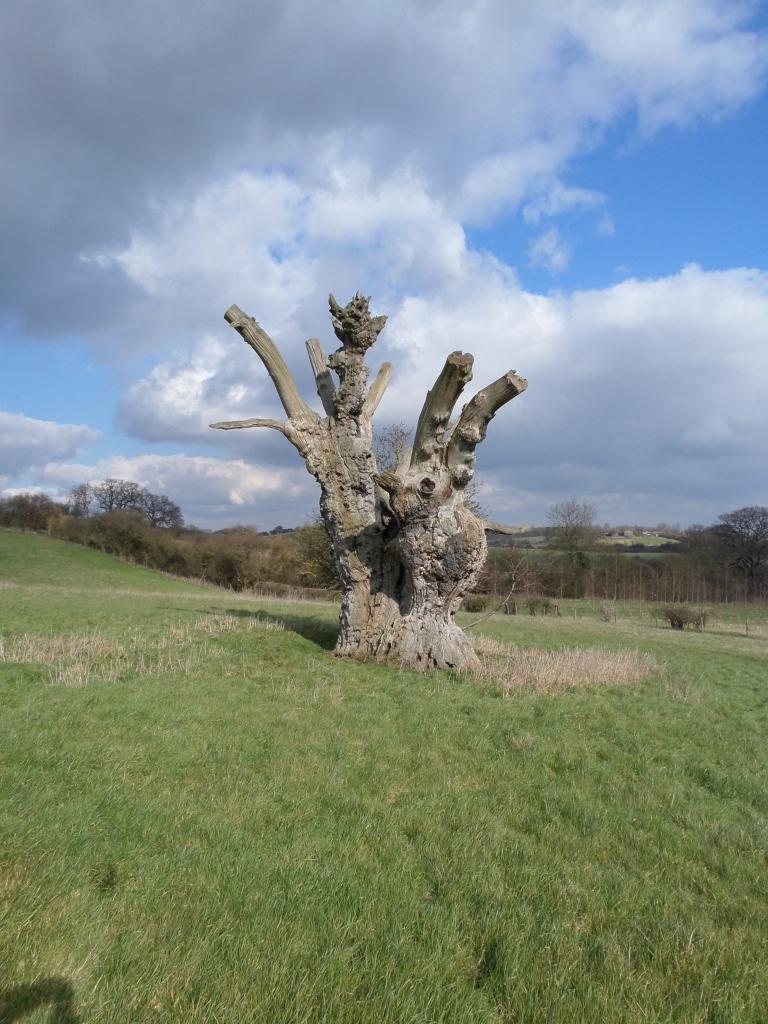 bunyans-oak-harlington