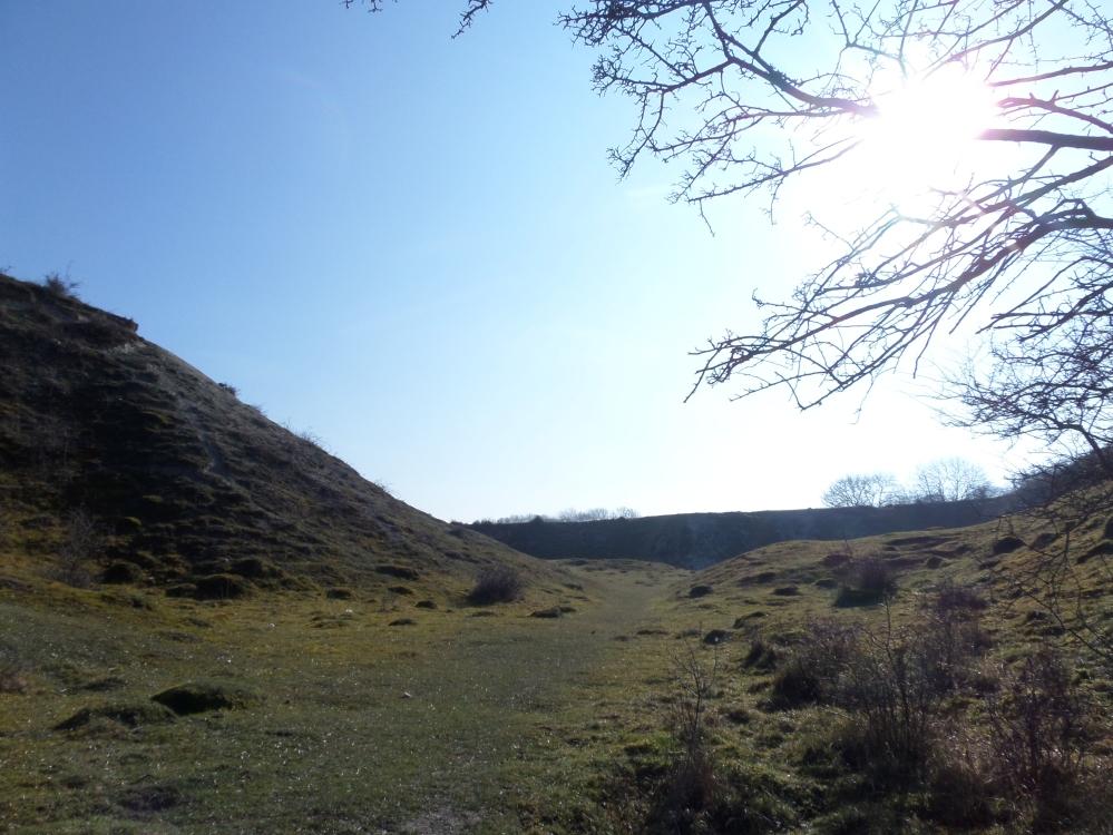 harlington-walks-rabbit-nibbled-turf