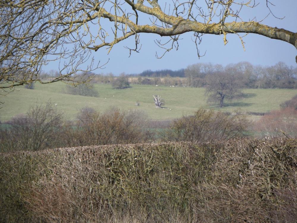 harlington-walks-buyan-oak