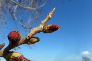 hsarlington-walks-spring-has-sprung
