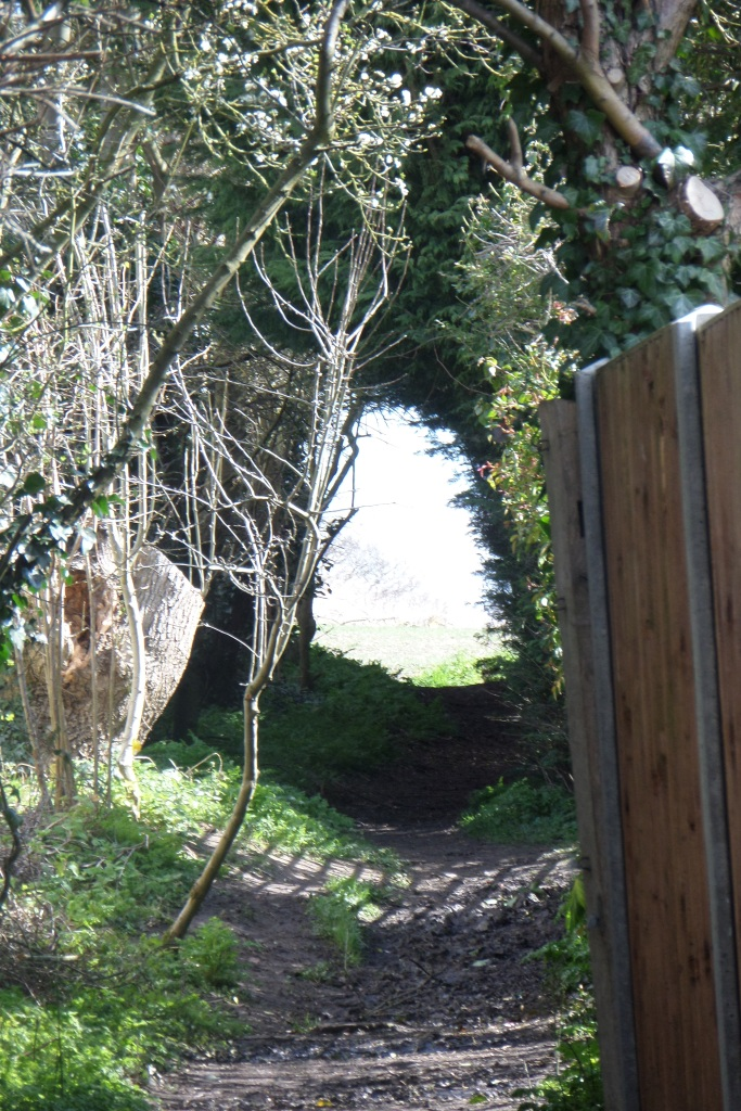 harlington-walks-from-hope-to-gratitude-tunnel