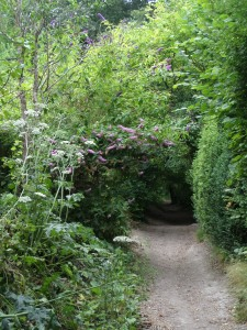 the-ridgeway-national-trail-near-chinnor