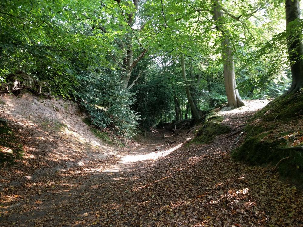 the-pilgrims-way-wood