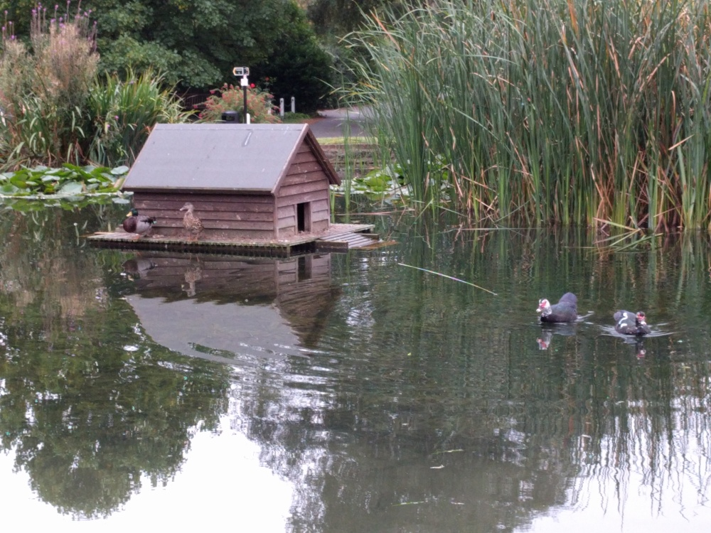 pilgrims-way-duck-pond-otford