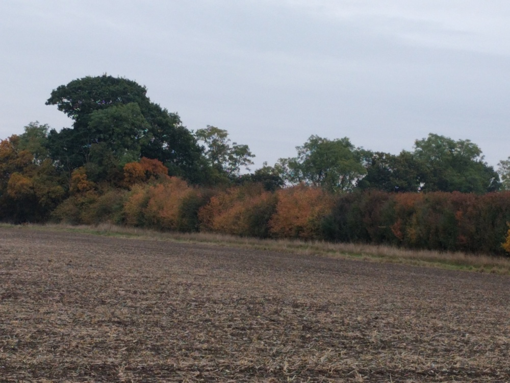 just-outs-de-harlington-early-autumn