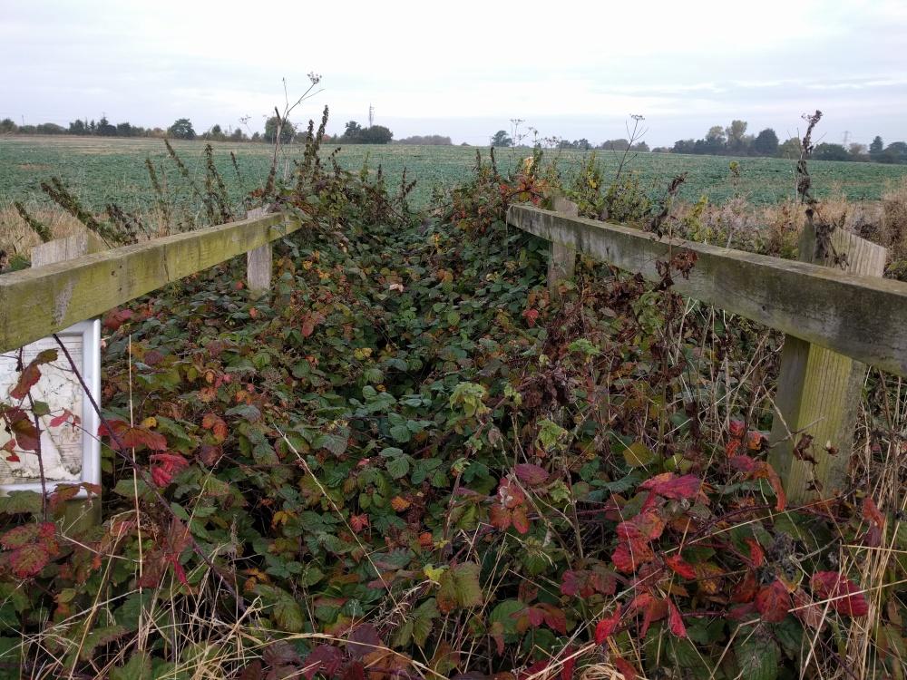 brambles-near-harlington