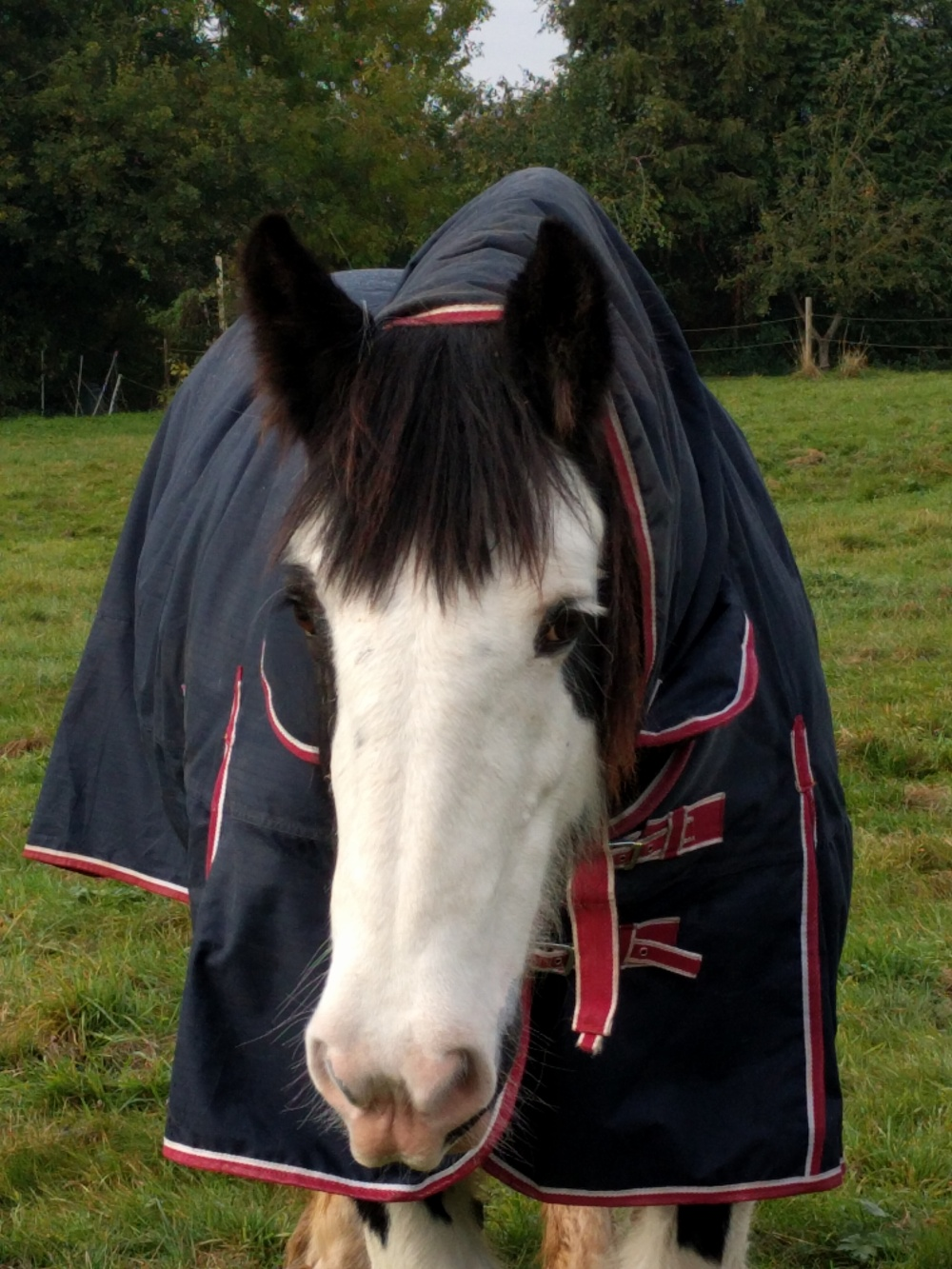 a-horse-near-harlington