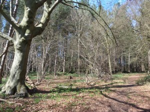 walking-the-hertfordshire-way