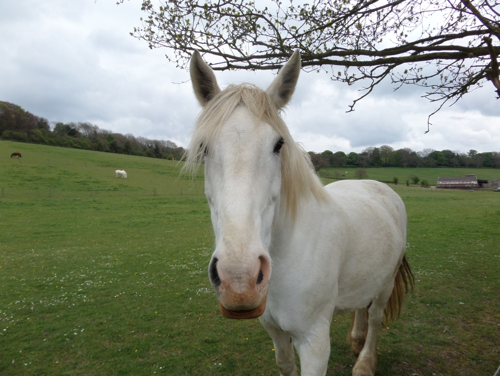a-horse-along-the-hertfordshire-way