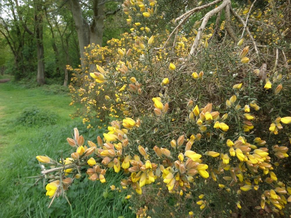whipsnade-heath
