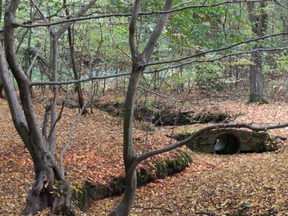 ruislip-woods